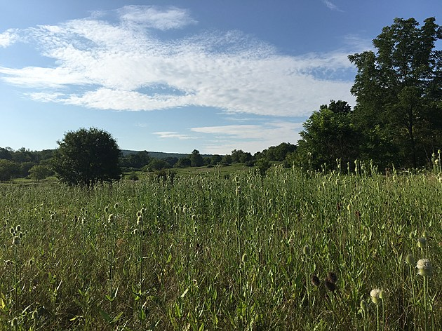The solar energy facility would be built on this site south of Route 434 in Apalachin. (Photo: Bob Joseph/WNBF News)