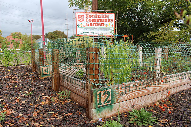 A community garden plot has been available at the new Salvation Army property for the past two summers. (Photo: Bob Joseph/WNBF News)